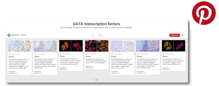 GATA transcription factors