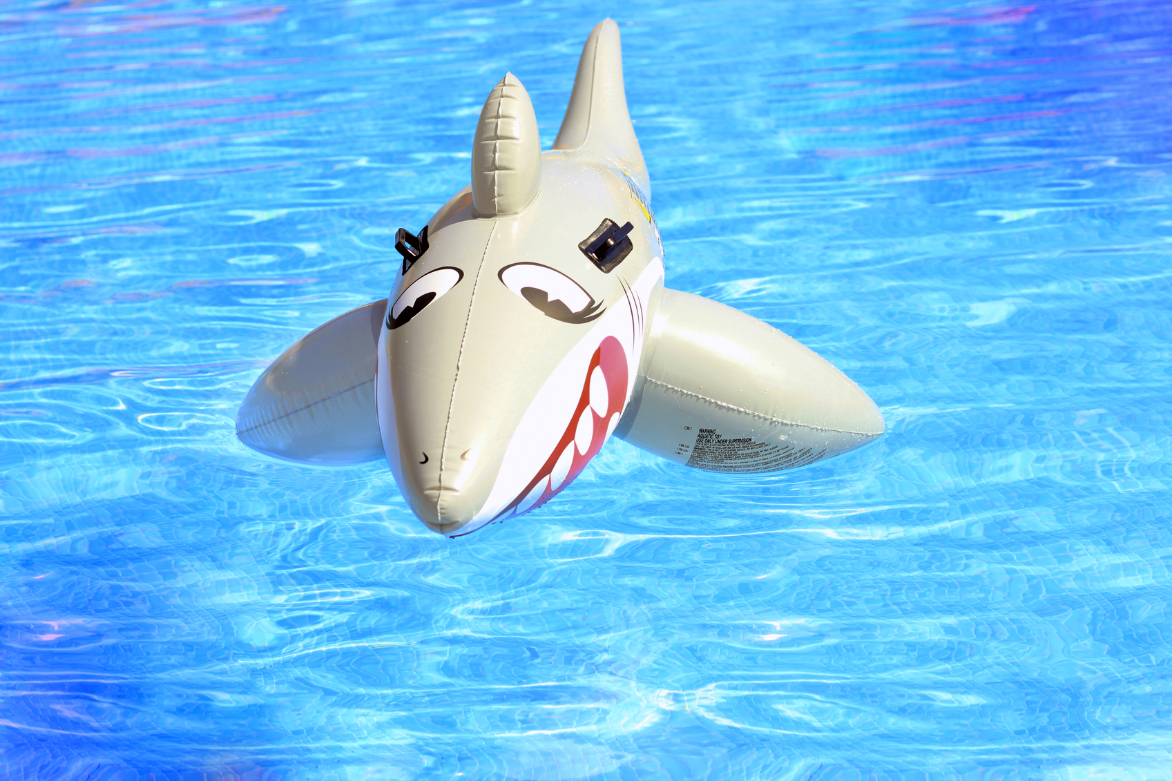 What If There Was A Shark In The Swimming Pool
